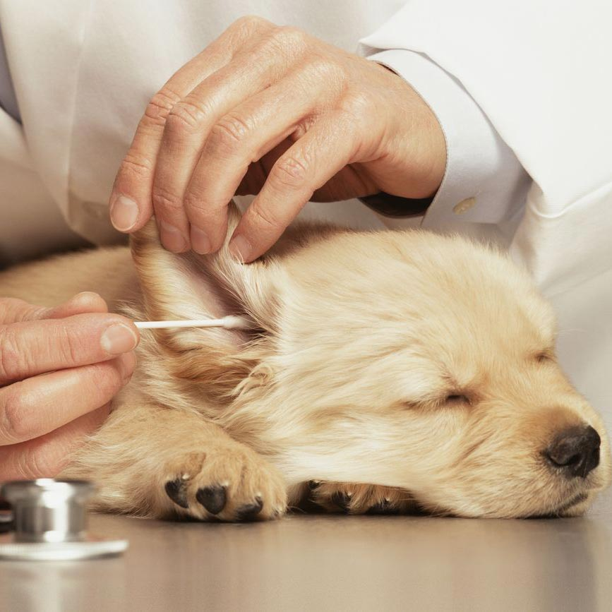 Services Ear Cleaning